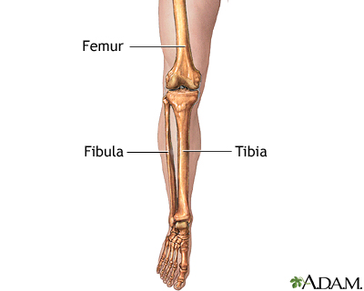 leg skeletal anatomy: medlineplus medical encyclopedia image, Human Body