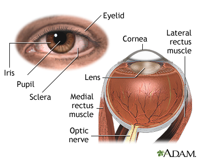 External and internal eye anatomy medlineplus medical encyclopedia external and internal eye anatomy ccuart Gallery
