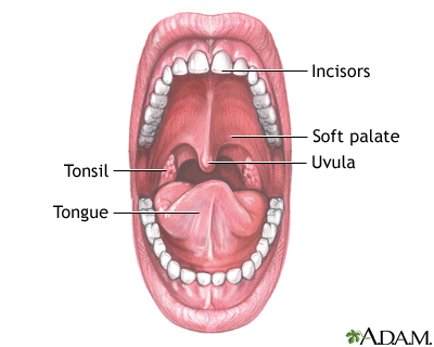 mouth anatomy: medlineplus medical encyclopedia image, Human Body