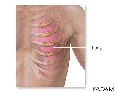 Ribs and lung anatomy: MedlinePlus Medical Encyclopedia Image