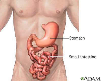 Stomach and small intestine: MedlinePlus Medical Encyclopedia Image