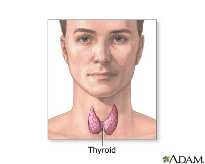 Thyroid gland: MedlinePlus Medical Encyclopedia Image