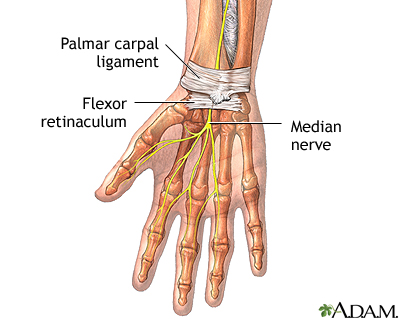 Wrist anatomy: MedlinePlus Medical Encyclopedia Image