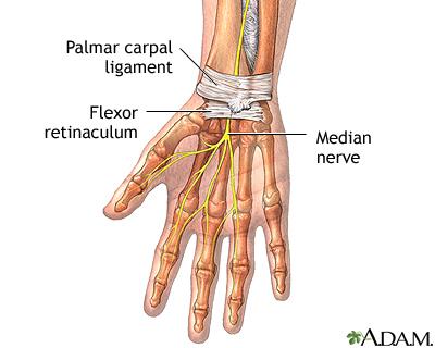 Wrist anatomy: MedlinePlus Medical Encyclopedia Image