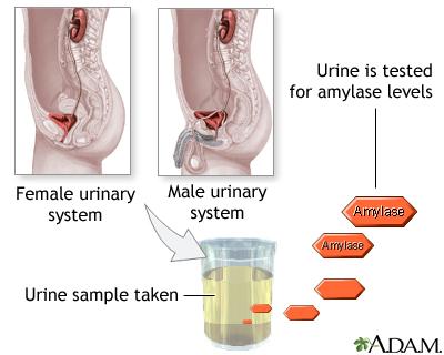 Amylase urine test