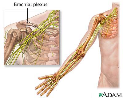 Brachial plexus: MedlinePlus Medical Encyclopedia Image