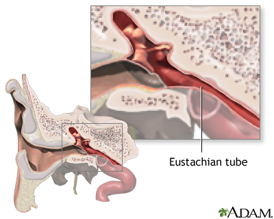 Eustachian tube anatomy: MedlinePlus Medical Encyclopedia Image