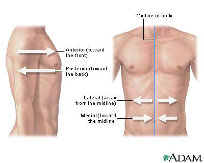 lateral orientation medlineplus medical encyclopedia image