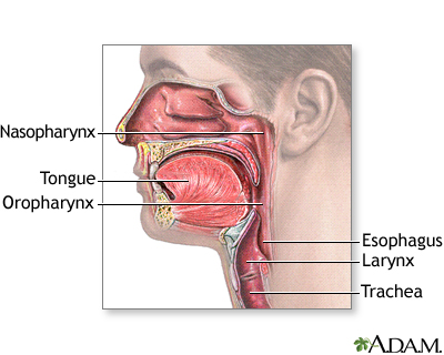 Oropharynx: MedlinePlus Medical Encyclopedia Image