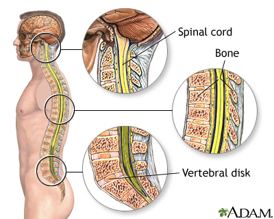 Spinal anatomy: MedlinePlus Medical Encyclopedia Image