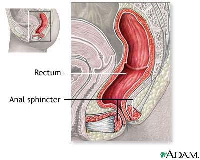 Anal sphincter anatomy: MedlinePlus Medical Encyclopedia Image