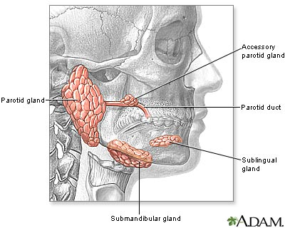 Head and neck glands medlineplus medical encyclopedia image head and neck glands ccuart Choice Image