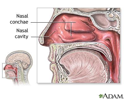 Nasal Anatomy Medlineplus Medical Encyclopedia Image
