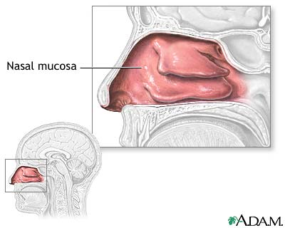 nasal mucosa medlineplus medical encyclopedia image Eye Mucus overview