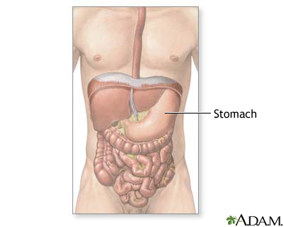 Normal abdominal anatomy