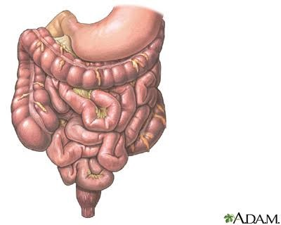 gastrointestinal tract: medlineplus medical encyclopedia image, Cephalic vein