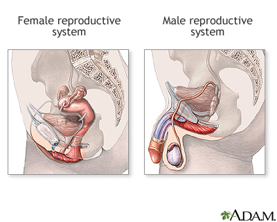 Male And Female Reproductive Systems Medlineplus Medical