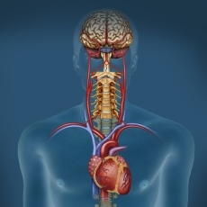 Autonomic Nervous System Disorders