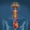 Trastornos del sistema nervioso autónomo