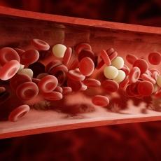 Blood | MedlinePlus