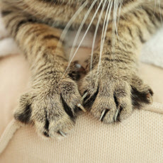 Cat Scratch Disease
