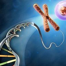 DNA packaged into chromosome
