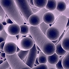 Infecciones por Clostridium difficile