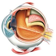 Infecciones de los ojos