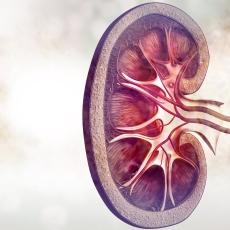 Enfermedades de los riñones