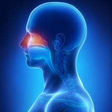 Nasal Cancer