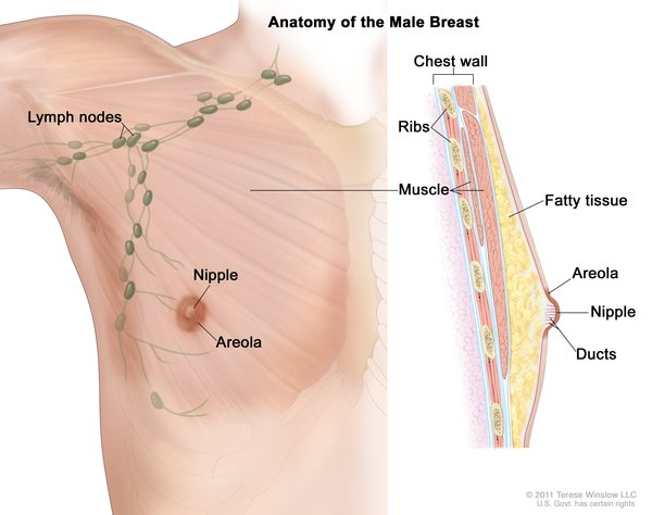Breast Cancer Medlineplus Genetics