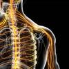 Enfermedades del sistema nervioso periférico