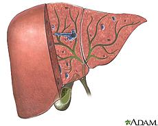 Ilustración de los órganos biliares y el sistema de conductos
