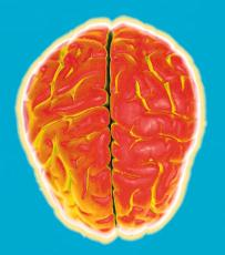 Photograph of a stylized brain