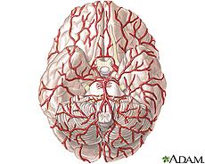 Ilustración de las arterias del cerebro
