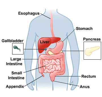 Body Map for Digestive System