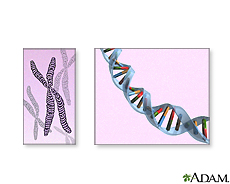 Illustration of chromosomes and DNA