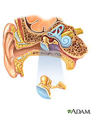 Illustration of the ear and inner ear anatomy