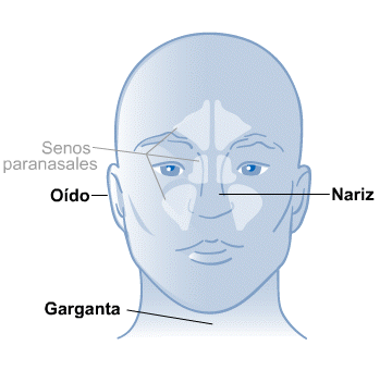 Body Map for Ear, Nose and Throat (Spanish)