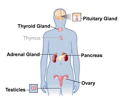 Body Map for Endocrine System