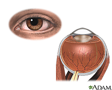Illustration of external and internal eye anatomy