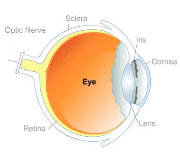Body Map for Eyes and Vision