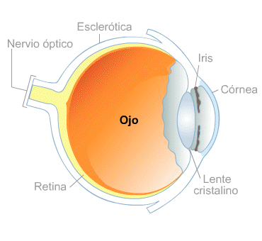 Body Map for Eyes and Vision (Spanish)