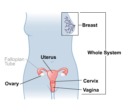 Body Map for Female Reproductive System