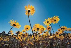 Fotografía de flores amarillas