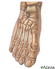 Ilustración de los huesos del pie