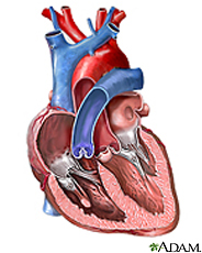Illustration of the heart valves