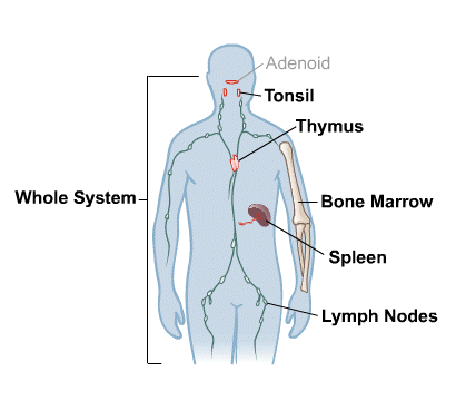 Body Map for Immune System