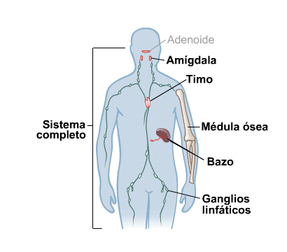 Body Map for Immune System (Spanish)