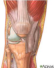 Ilustración de la anatomía de la rodilla